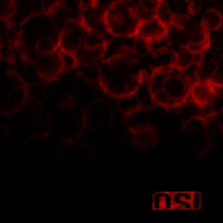 osi-blood